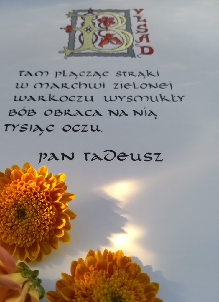 Kaligrafia małopolska, kaligrafia Pan Tadeusz, tam plącząc w marchwi zielonej warkoczu wysmukły bób obraca na nią tysiąc oczu, kaligrafia uncjała