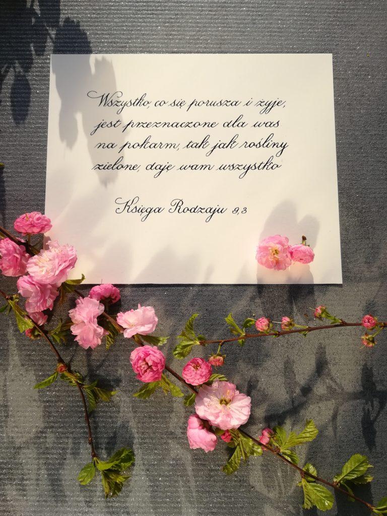 kaligrafia małopolska, kaligrafia wieliczka, wieliczka impresje, migdałek, kwitnący migdałek, wiosenne inspiracje