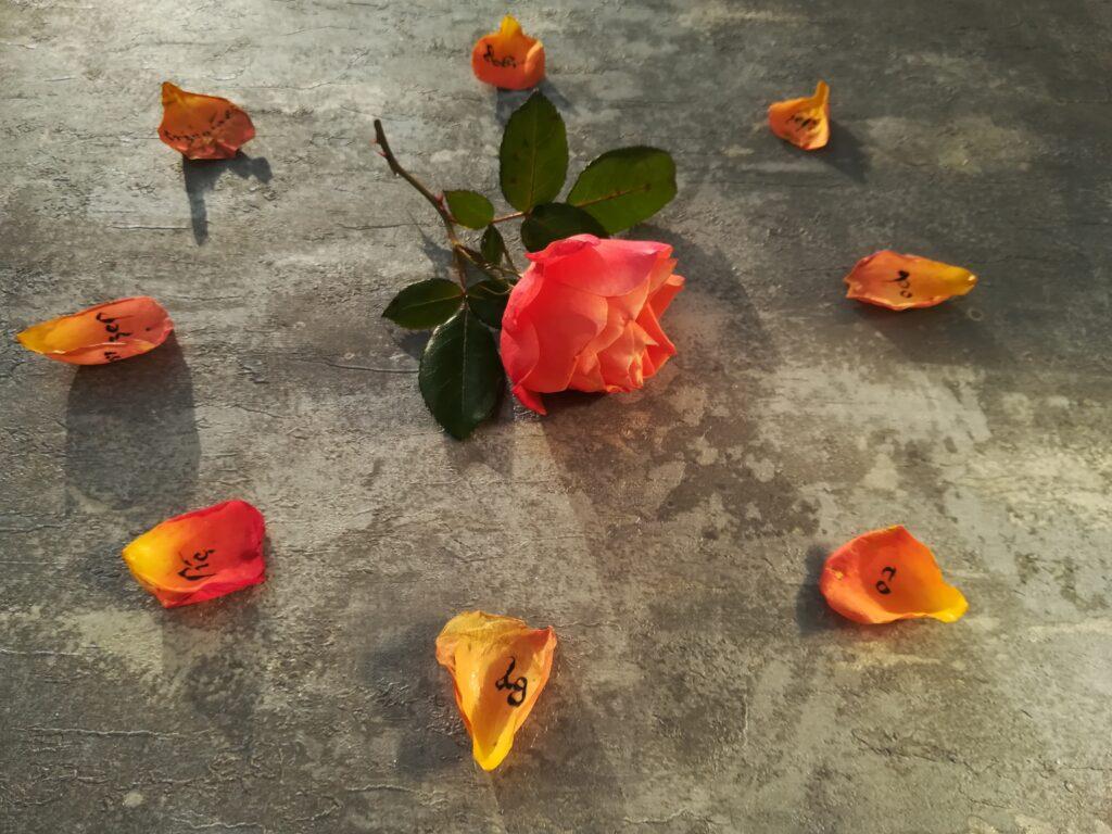 cytaty kaligrafia, kaligrafia na płatkach róży, kaligrafia ojciec Pio
