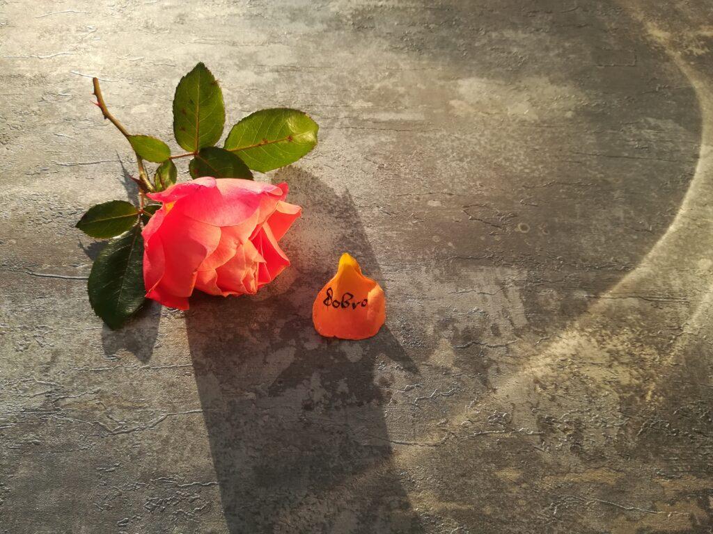 kaligrafia na płatkach róży