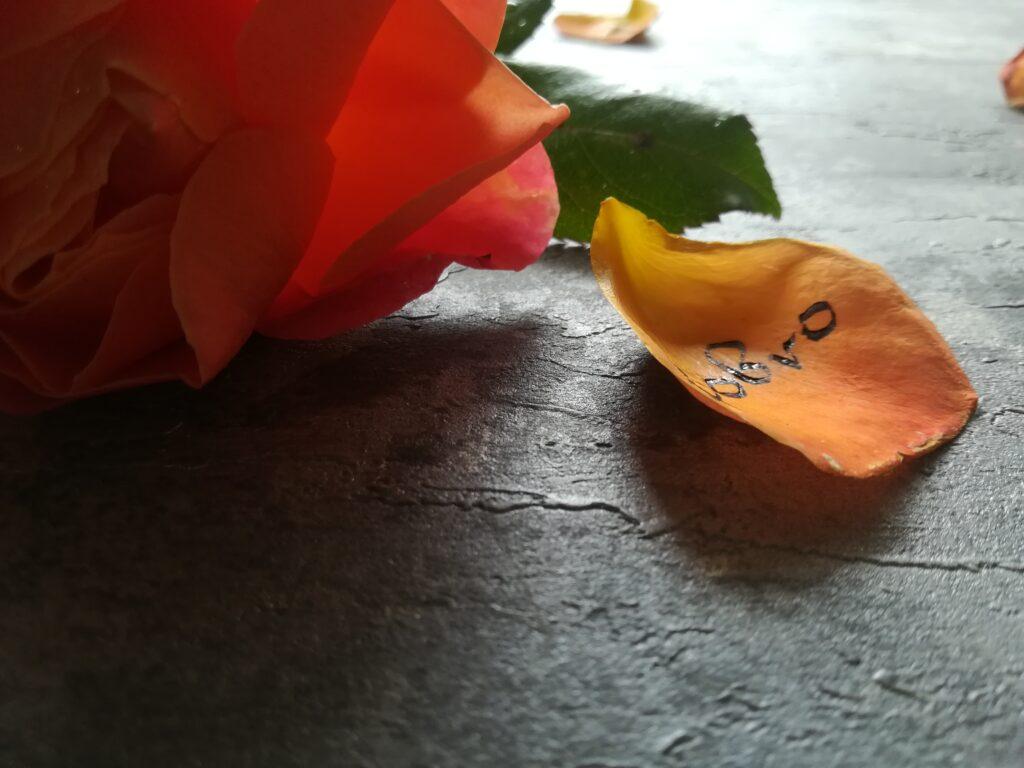 kaligrafia na płatkach róży, róża kaligrafia