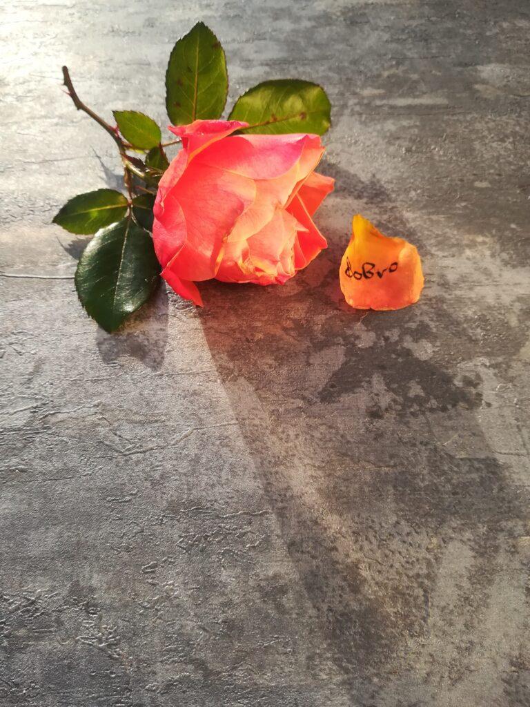 kaligrafia na róży